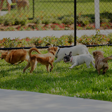 Large Dog Park at Porter Ranch Townhomes Apartments
